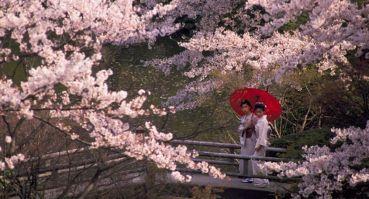 koishikawa-korakuen-garden-tokyo-japan13cd017l768